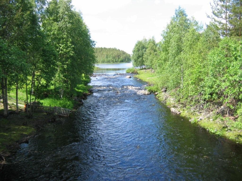 Kiekinniemenkoski 2009.